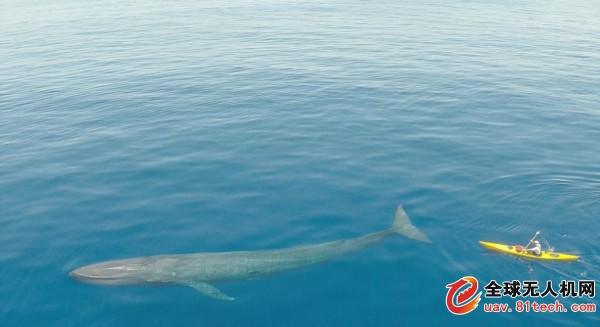 唯美蓝鲸水彩手绘图片