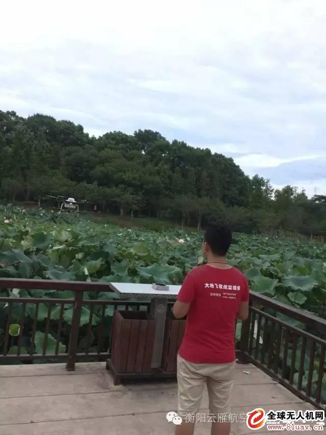 衡阳南湖公园荷塘引进无人机打药