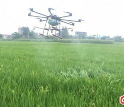 四川成都无人机飞机水稻打药玉米打药果树打药