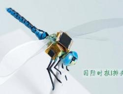 受控生物,让昆虫加入特种作战