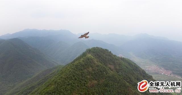 无人机航拍遭受老鹰突击