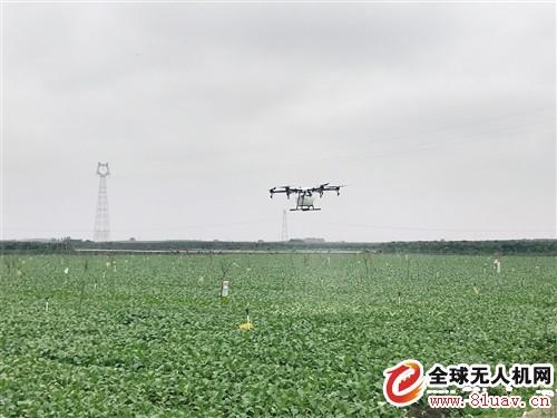 无人机洒营养液 高科技元素助推广西武鸣特征农业开展