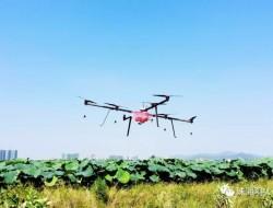 羽人:走在全省前列,珠海农用无人机统防统治服务又进一步!