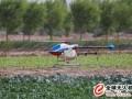 植保无人机飞防作业如何预防药害?