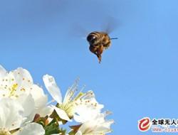 蜜蜂助人类研制自动飞行器