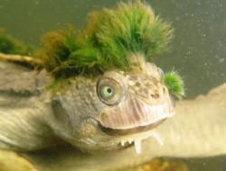 臻迪百科(020) 隐龟——你说谁天生带着绿帽子呢!?